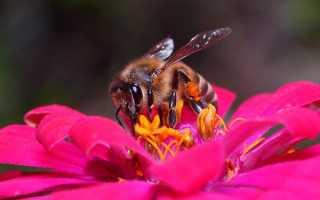 К чему снится рой пчел по сонникам Миллера, Фрейда, Ванги