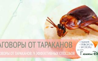 Заговор от тараканов – как избавиться от вредителей навсегда