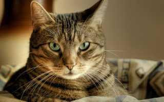 К чему снится кошка с котятами по соннику Нострадамуса, Ванги, Фрейда, Миллера